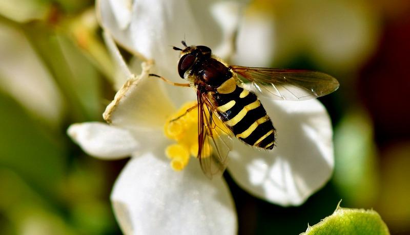 Insekti vrebaju na svakom koraku